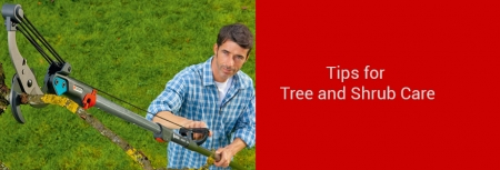 Tree and Shrub Care Tips